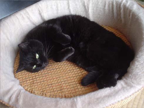 まぐろ018*猫ベッド