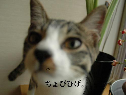 080921azuki4