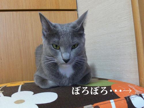 081002sakura1