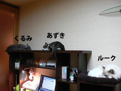 100110azukilukekurumi