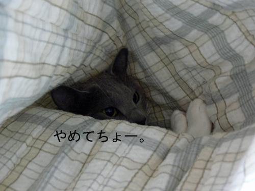 20100208sakura2