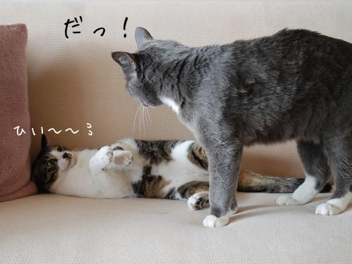 20100321tabiazuki3