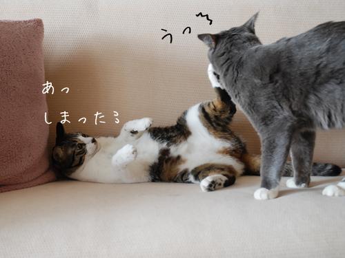 20100321tabiazuki4