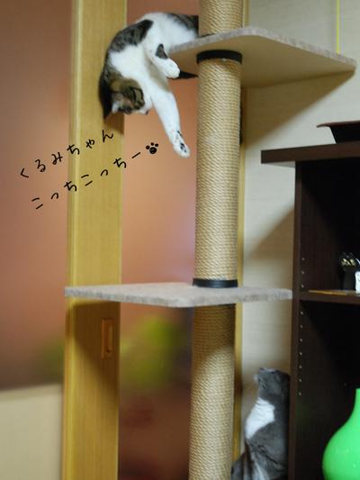 20100325azukikurumi_2