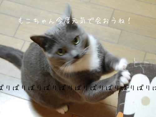 20100328kurumi5_2