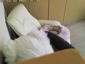 20100510kamera4