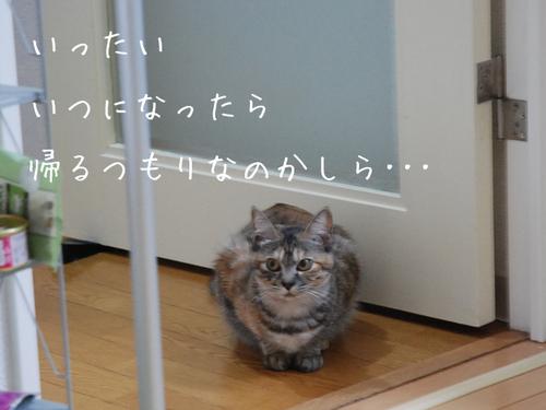 20100607mowa4