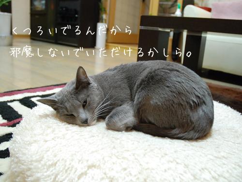 20100616sakura1