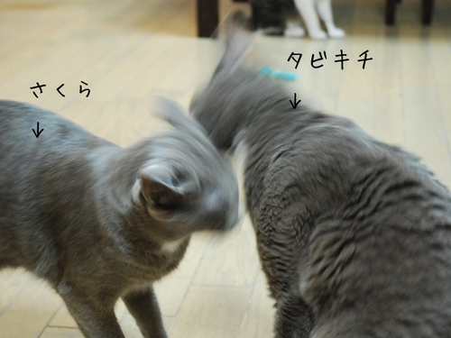 20100616tabisakura1