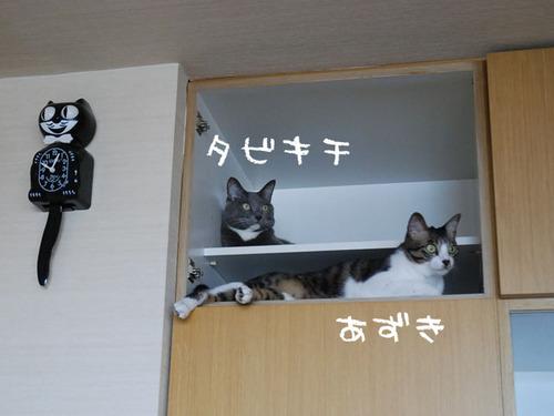 20100729tabiazuki