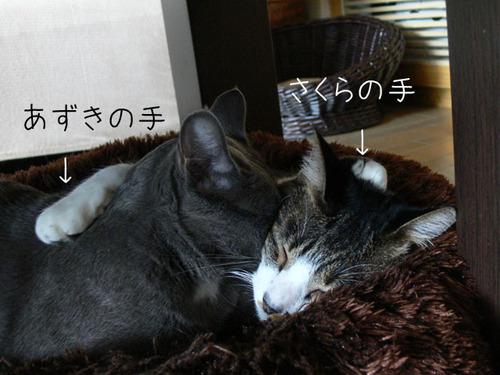 20101011sakurazuki2