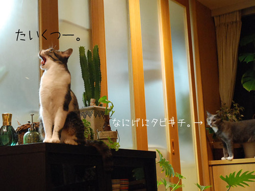 20101103azuki2_2