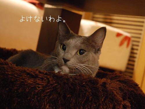 20101103sakura2