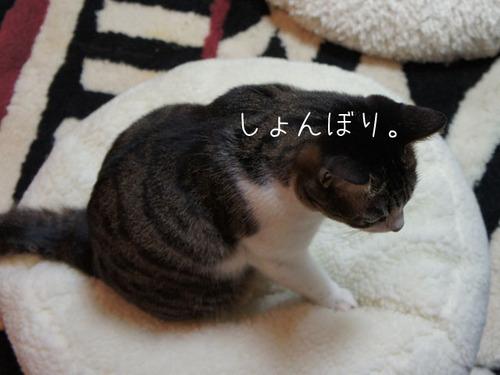 20110316azuki2