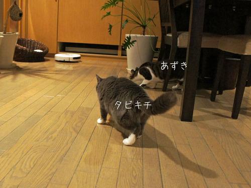 20110804tabiazuki