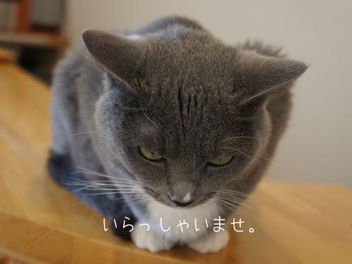 20110810moko2