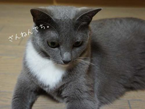 20110928kurumi_2