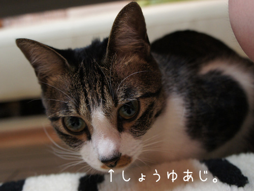 20111024azuki1
