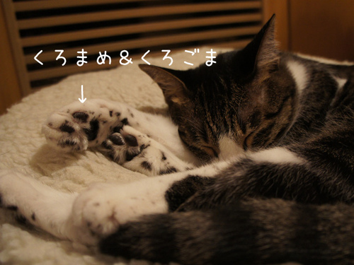 20111024azuki2