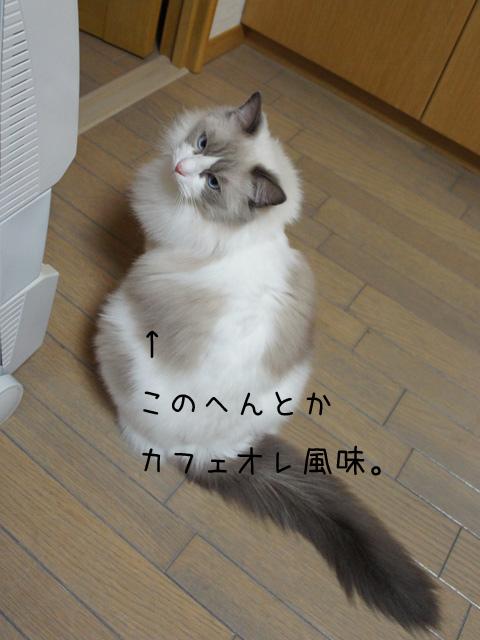 20111024luke2