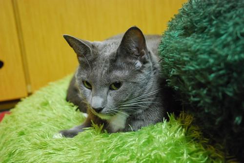 20121110sakura